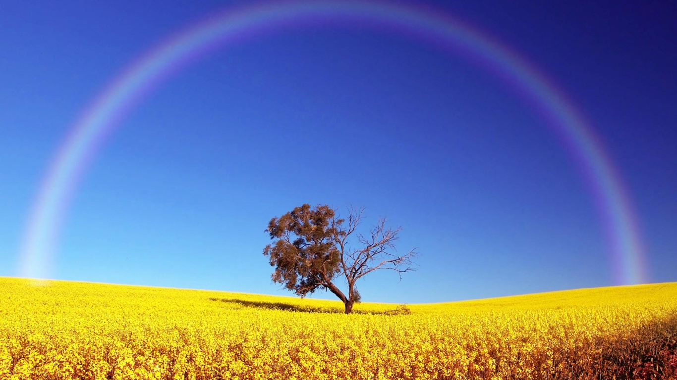 rainbow-over-field-wallpapers_27907_1366x768