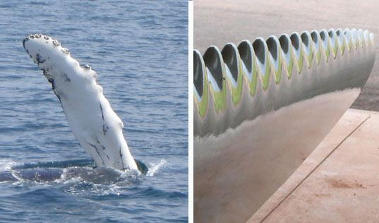 whale-turbines-biomimicry